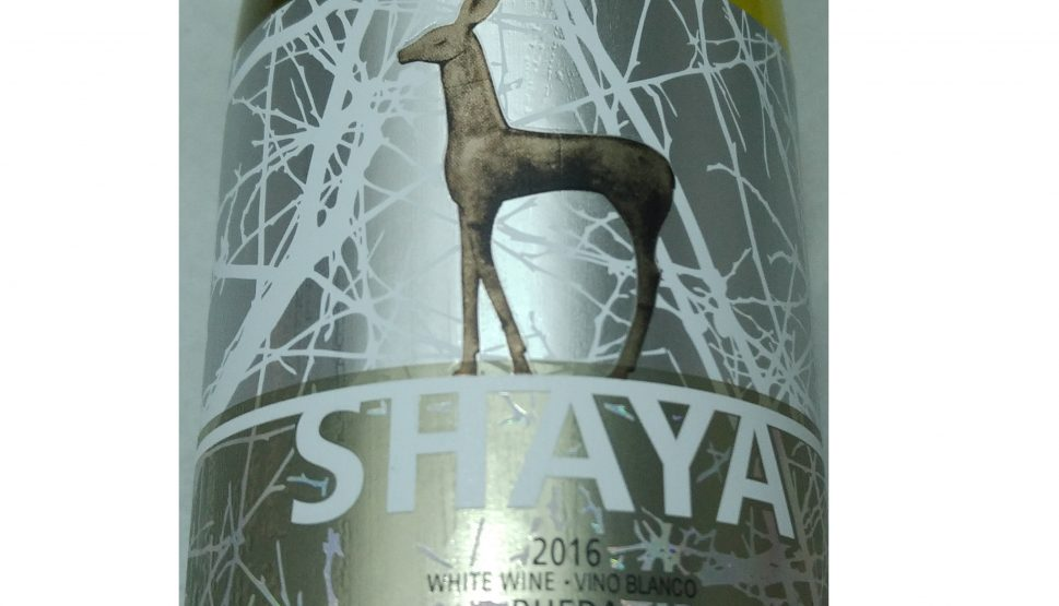 Shaya 2016